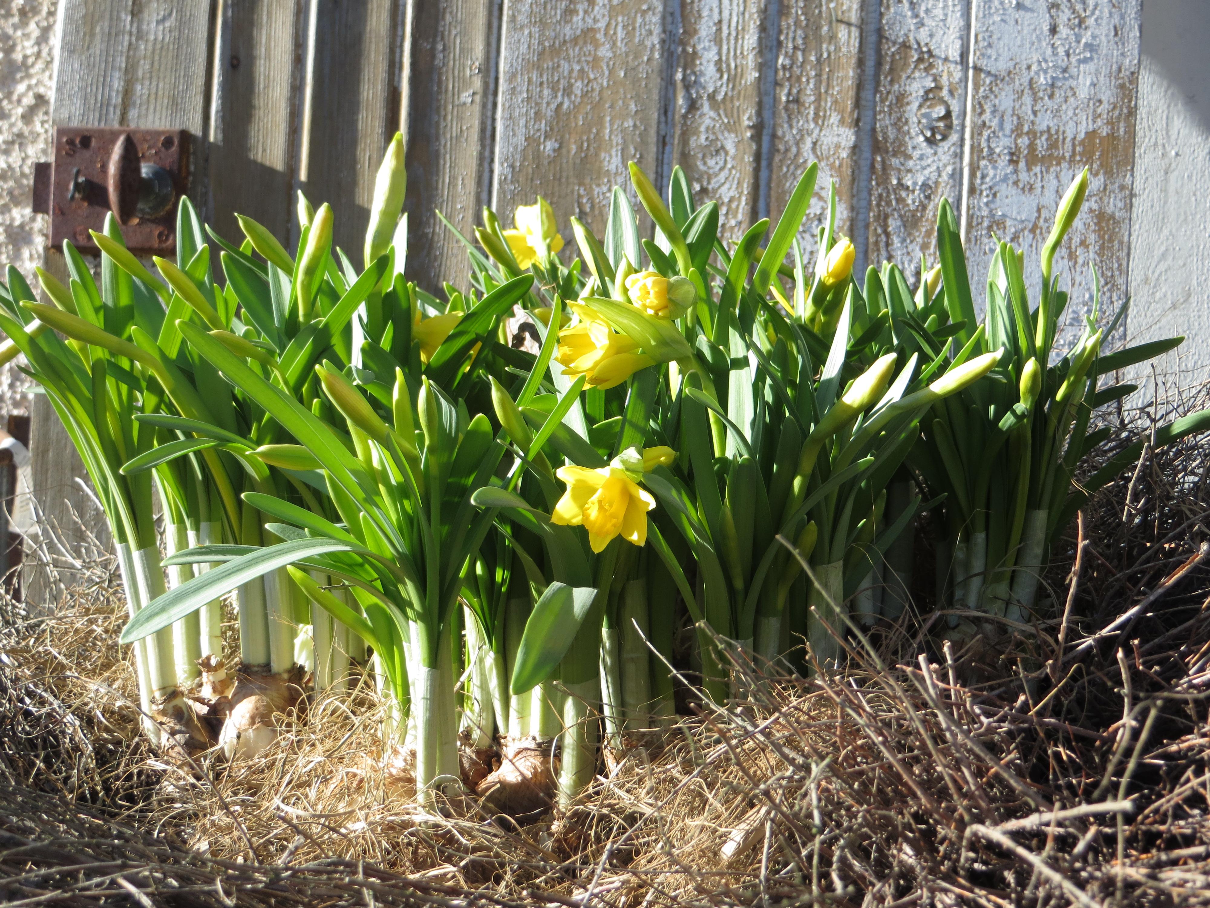 Kevät etenee, vapuksi putiikki hiljenee